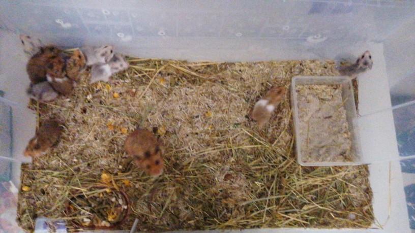 hamsters-bebes-big-0