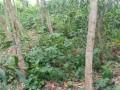 terreno-vacio-con-plantaciones-de-madera-small-5