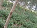 terreno-vacio-con-plantaciones-de-madera-small-3