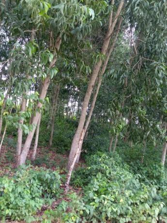 terreno-vacio-con-plantaciones-de-madera-big-0