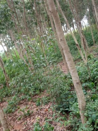 terreno-vacio-con-plantaciones-de-madera-big-4