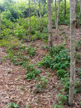 terreno-vacio-con-plantaciones-de-madera-big-2