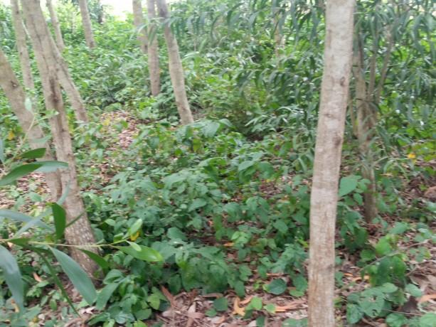 terreno-vacio-con-plantaciones-de-madera-big-5