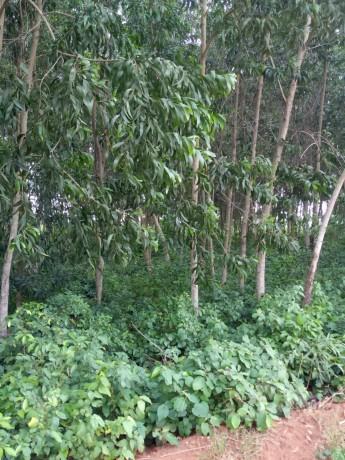 terreno-vacio-con-plantaciones-de-madera-big-1