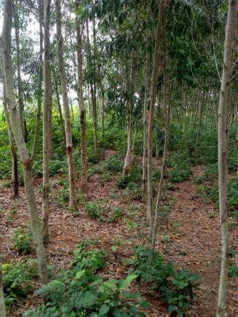 terreno-vazio-com-plantacao-de-madeira-big-0