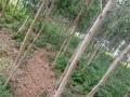 terreno-vazio-com-plantacao-de-madeira-small-1
