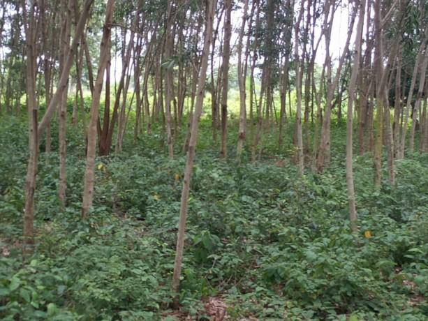 terreno-vazio-com-plantacao-de-madeira-big-4