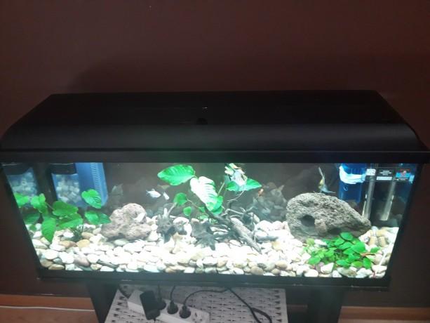aquario-de-100-4060-big-0