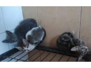 Ofereço gatinhos