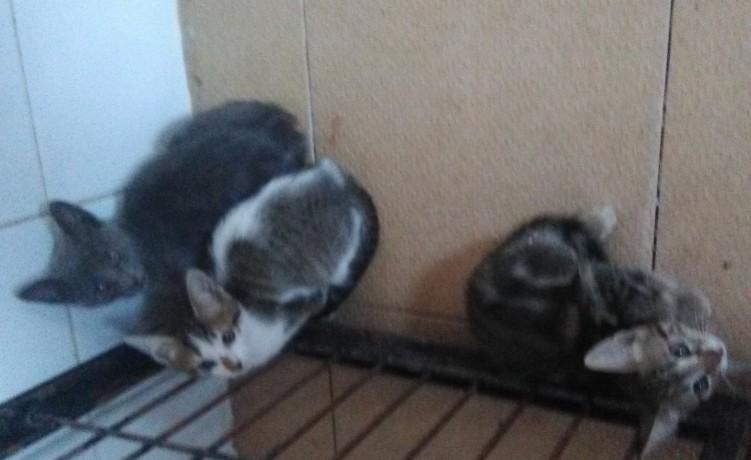 ofereco-gatinhos-big-2