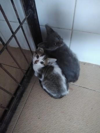 ofereco-gatinhos-big-0