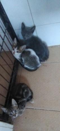 ofereco-gatinhos-big-1